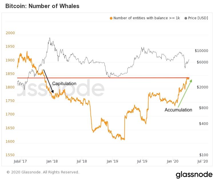 С начала текущего года наблюдается активный рост числа биткоин-адресов с балансом свыше 1000 BTC.